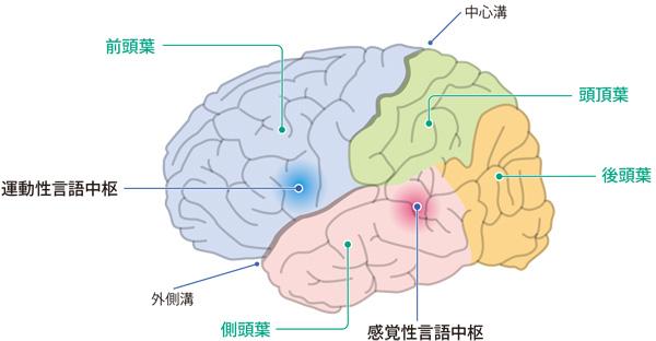 認知症 Minds版やさしい解説脳のしくみとはたらき