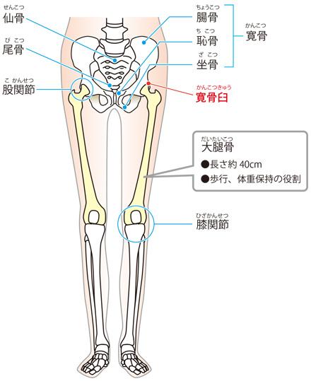 大腿 骨 大 転 子